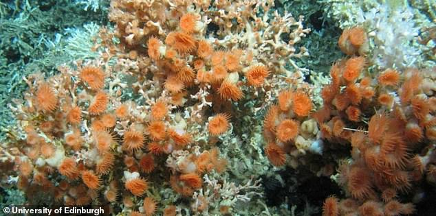 Anemones at the Rockall Bank. Because they were exploring depths that would crush human divers, underwater robots were deployed