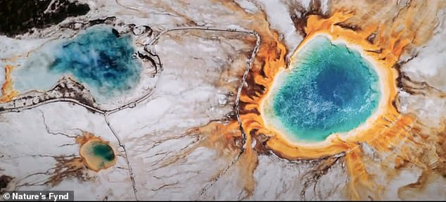 Nature's Fynd is using extremophiles, which is a fungal strain capable of surviving in extreme environments, like Yellowstone's hot springs (pictured) and produces high levels of complete protein when grown in a controlled setting