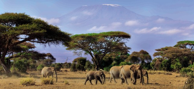 Elephants in front of mountains