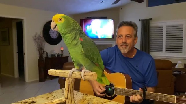 Video grab of Tico the parrot singing