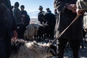 Men sell goats and sheep at Sary-Mogol