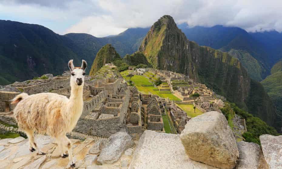 Llama standing at Machu Picchu overlook in Peru.