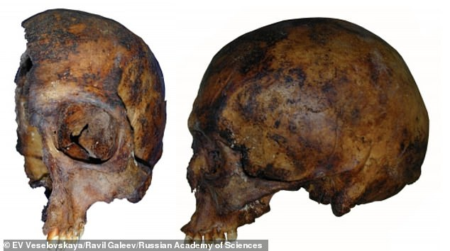 Scientists used the rotting skulls of the royal couple to build 3D models using laser scanning and photogrammetry - but the project took months due to half of the king's skull missing (pictured)