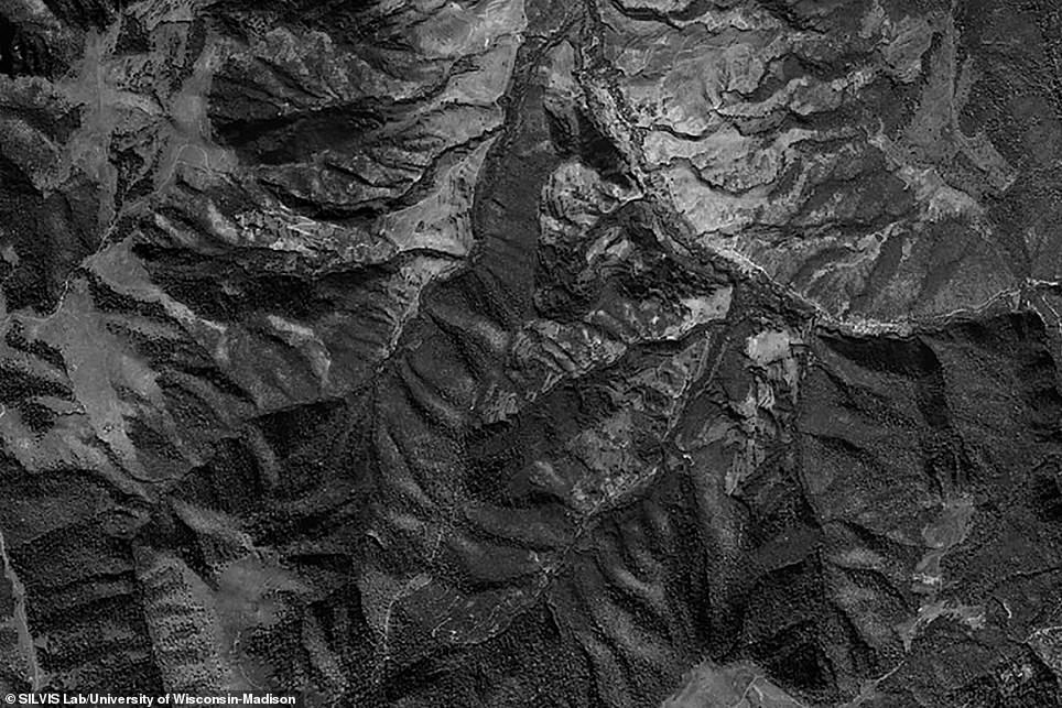 An image captured by the Corona Project shows a forest in Armeniat