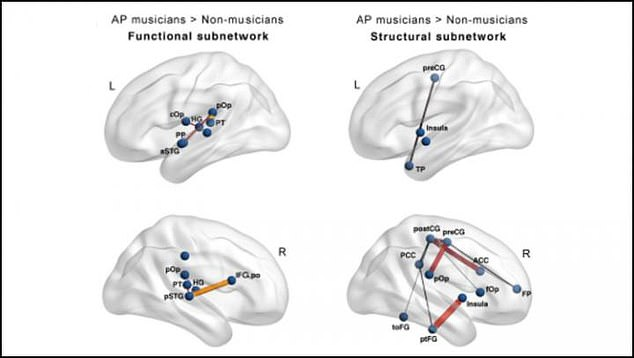 In the biggest sample to date, Dr Leipold and colleagues also looked at the brains of musicians with perfect pitch and compared it to musicians who didn't have it
