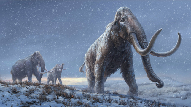 ***Embargoed until 16.00 GMT, WED FEB 15 (11.00 ET)*** The illustration represents a reconstruction of the steppe mammoths that preceded the woolly mammoth, based on the genetic knowledge we now have from the Adycha mammoth.See SWNS story SWNNmammoth. The world's oldest DNA has been extracted from the tooth of a mammoth that lived 1.65 million years ago. It smashes the previous record by almost a million years - offering hope of mapping the genomes of a host of Ice Age giants. An international team also sequenced the teeth of two other mammoths - dating back 1.34 million and 870,000 years. The breakthrough sheds fresh light on the evolution of the iconic beast - and how fast it became adapted to a cold climate.