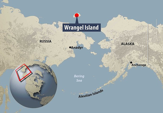 Around 4,000 years ago the last surviving mammoths who lived on Wrangel Island in the Arctic Ocean died out suddenly