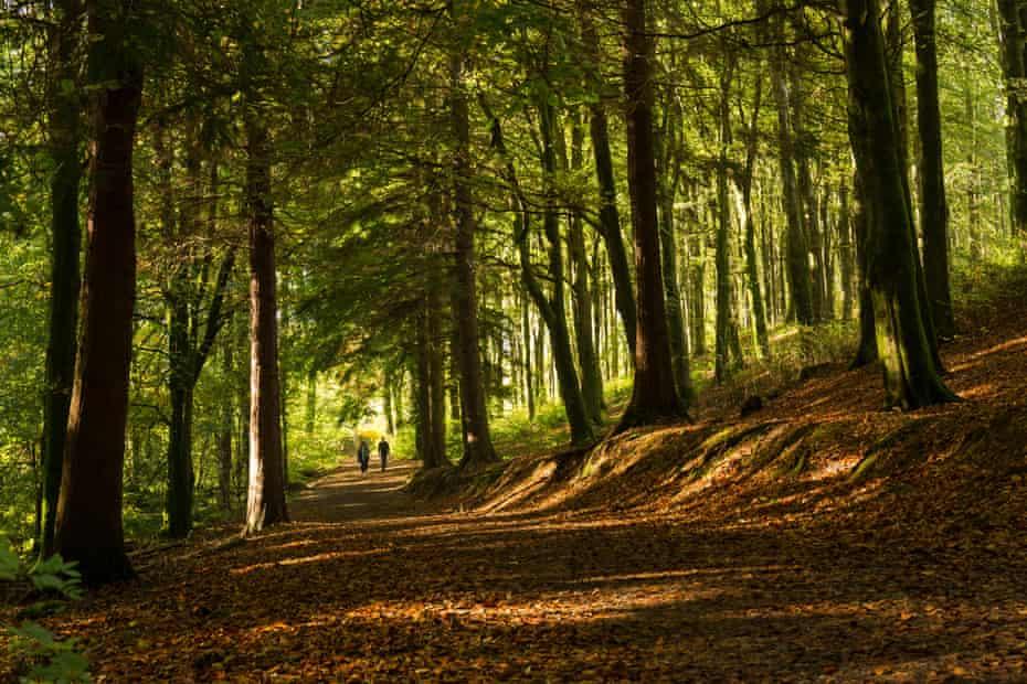 Portglenone Forest, County Antrim,
