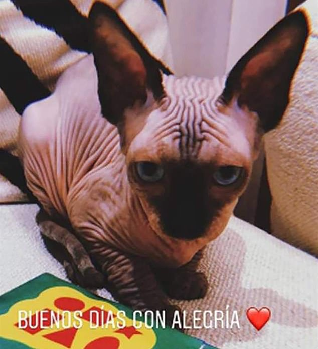 The cat is believed to be named after Ronaldo's former Real Madrid teammate Pepe, who is also bald