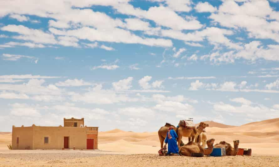 A berber with his camels at the Erg Chebbi sand dunes in Morocco.
