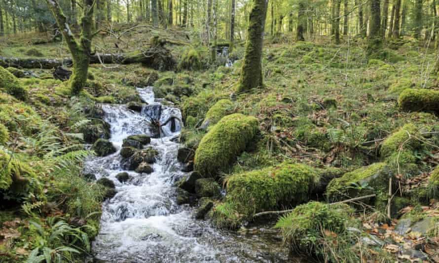 Gamlan River John Miller:National Trust Images