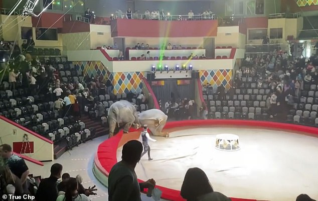 Heading for the exit: Spectators flee the arena after the two elephants came to blows as trainers tried desperately to bring them under control