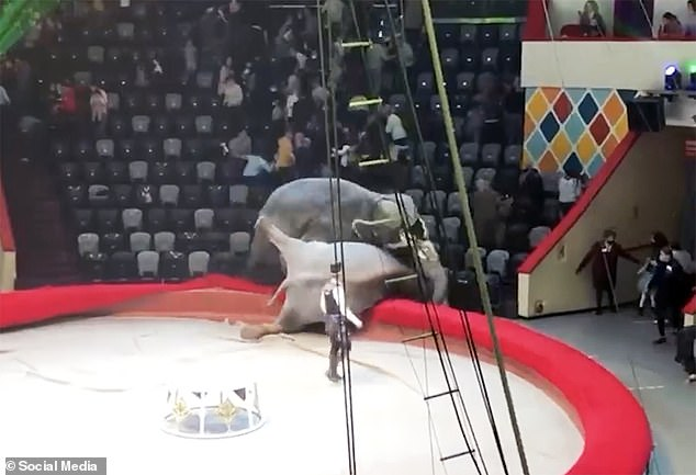 Stampede: The audience cleared out of the venue as the elephants fought at the side of the ring, although the circus director said that nobody was hurt