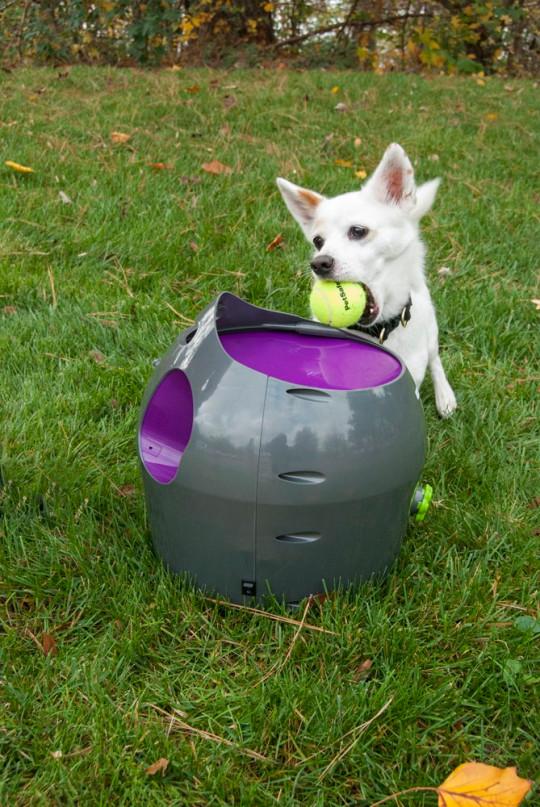 The PetSafe automatic ball launcher