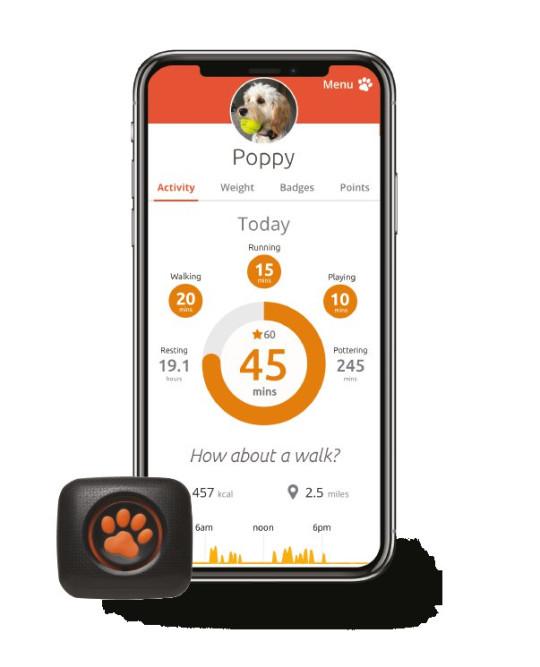 The PitPat dog activity monitor