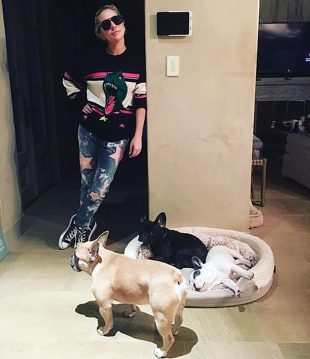 With her babies:The news comes weeks after Gaga's French bulldogs Koji and Gustav were returned to her following their abduction