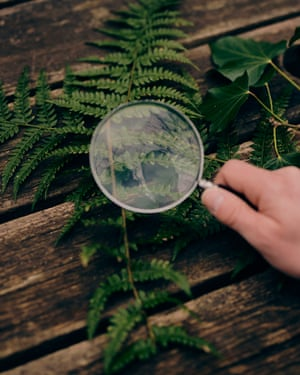 Inspecting a fern leaf with a magnifying glass
