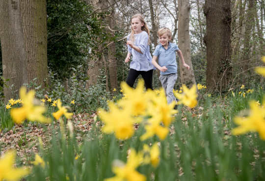 children play in a woods filled with daffodils