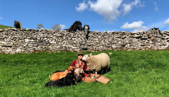 Gilly Chippendale / Caters News (Pictured Gilly has a picnic with her dogs and Bella. ) - This ewe-nique sheep was rejected at birth by her mother and now believes she's a dog. Bella, the two-year-old Texel X Lleyn, prefers biscuits to grass, goes on family dog walks and even runs away from other sheep, after being rejected first by her birth mother and then by several other ewes when she was just a baby. Farmer's wife, Gilly Chippendale, took Bella into her care and since then, the friendly sheep has formed an incredible bond with both Gilly and her other pets - seven dogs and one cat - joining them on family walks and picnics and relaxing with them in their beautiful, fortified manor house in Cumbria. Barmy Bella is so convinced she isn't a sheep, she is frightened when other sheep approach her and even runs away from the rest of the herd. - SEE CATERS COPY