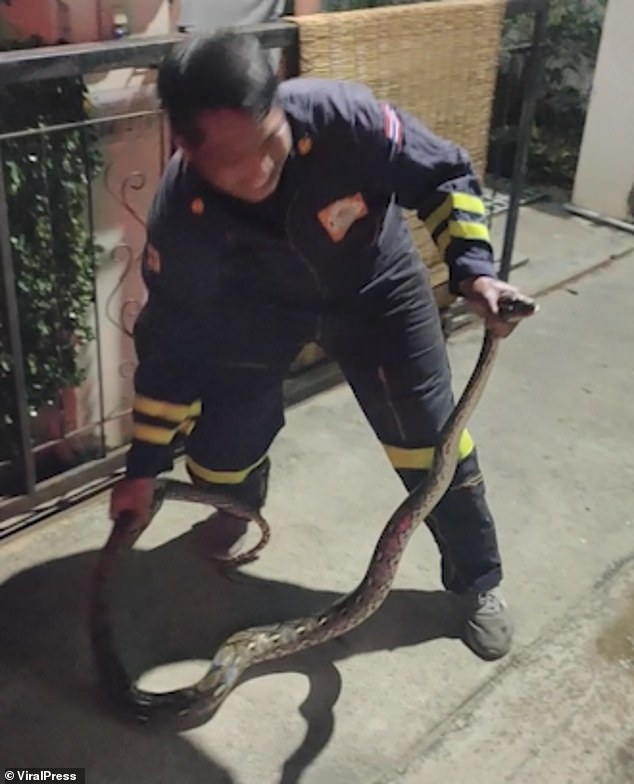 The rescue team then bring the python out of the house and place it into a bag to keep it secure while they journey away from the village to release it back into the wild