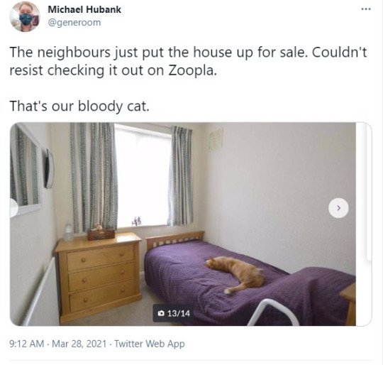 Man finds cat in neighbours home for sale on Zoopla Picture: Michael Hubank/Twitter