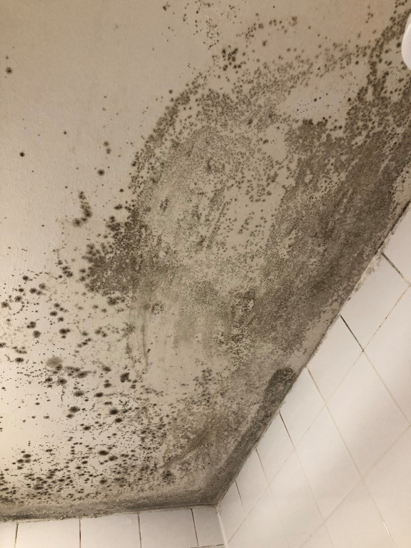 mould in bathroom ceiling