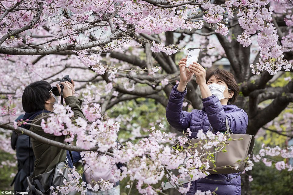 Tokyo residents rush out to take photos of the early cherry blossom bloom. This is the second year in a row the peak bloom has been declared at the earliest date since records began in 1953