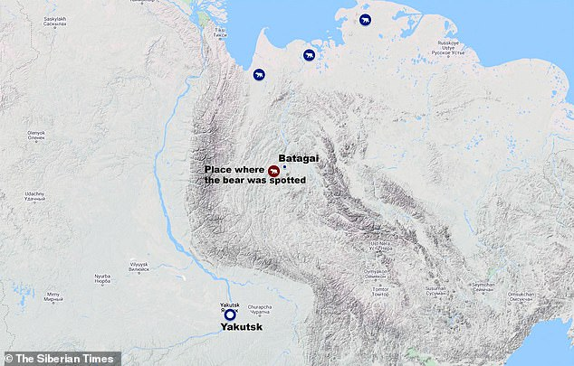 The bear was spotted 35 miles south of Batagai, as shown on this map, far south of its natural Arctic habitat and heading towards the city of Yakutsk