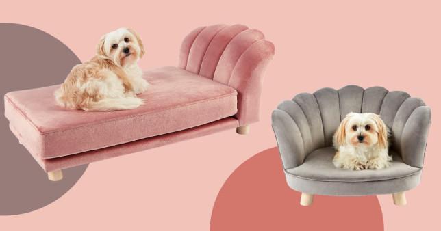 Aldi launches mini scalloped chairs and chaise longues for pets Aldi