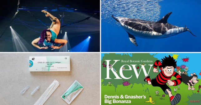 Hippdrome circus, Dennis The Menace at Kew Gardens, Whales in Tenerife, Qured Covid testing