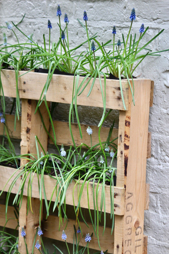 Gabby's upcycled pallet planter