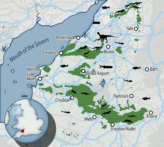 A new map showing the location of series of small tropical islands 200 million years ago in the area that is now Bristol sheds new light on how British dinosaurs lived