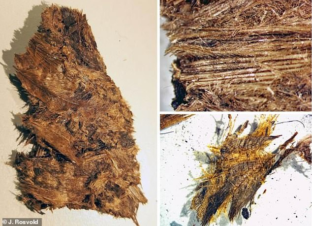 Excavated feathers from one of the boat graves. They are very well preserved, but brittle, densely packed and entangled