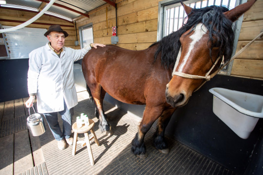 Frank Shellard who runs Mares Milk near Bath.