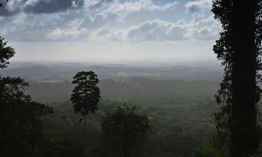 The Amazon rainforest in Amapa State, Brazil.