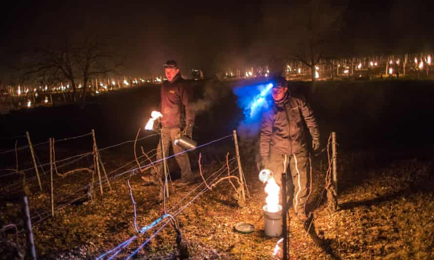 French winemakers light anti-frost candles in a vineyard in Chablis, Burgundy, France.