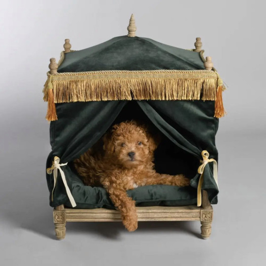 Edward Pet Palace by Lord Lou A four-poster dog bed draped in plush blue or green velvet is the perfect present for your dog ?199. swishlondon.uk