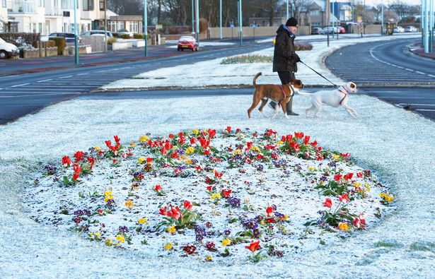 A man walks dogs in a light dusting of overnight snow at Whitley Bay on the North East coast