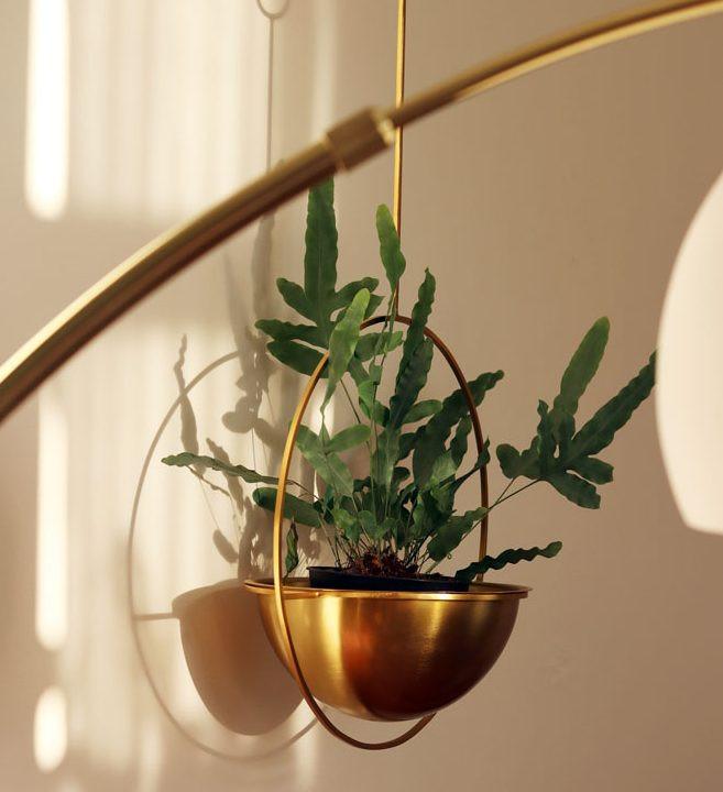 what I Rent: Zeena, one-bedroom flat in Hackney - plant hanging in gold dish