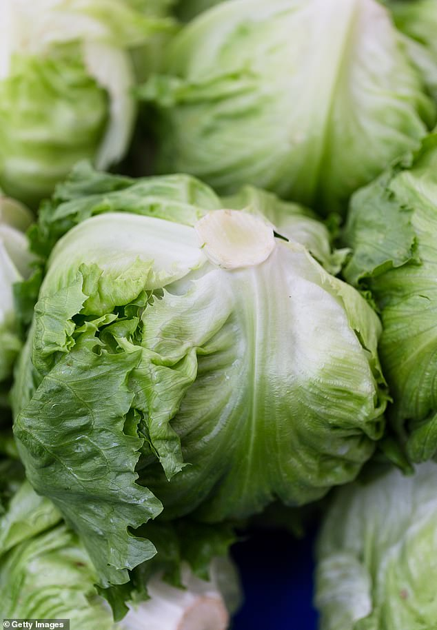 Along with finding its ancient roots, the study found how the most recent iceberg lettuce diverged from 'ancient' butterhead lettuce in the genetic material of the wild Lactuca virosa, a fact that had long been suspected based on the genealogical data of these lettuce varieties