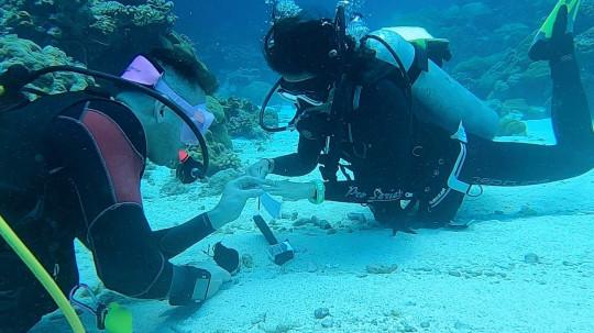 Mattia proposing to Fiona underwater