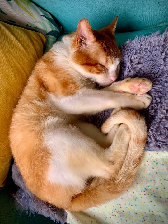 Blind cat left dumped at the start of lockdown finds forever home