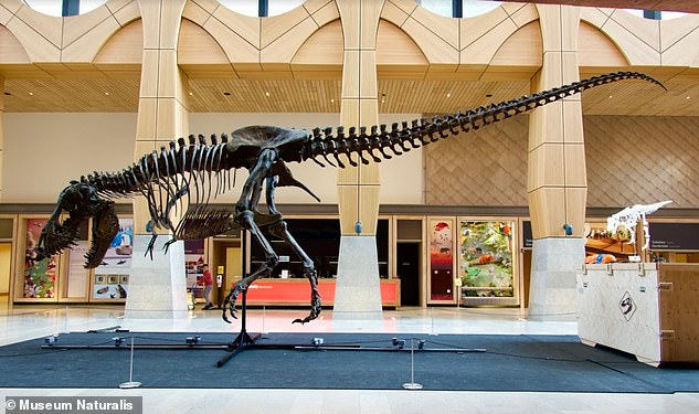Trix (the original fossil) is mounted for display at Museum Naturalis in Leiden, the Netherlands
