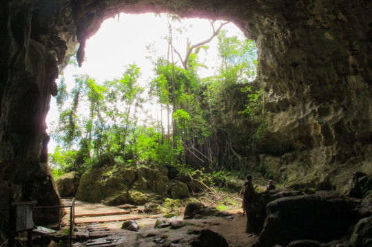 The Callou Cave site in the Philippines where the fossils of new species of rats were found. (PA)