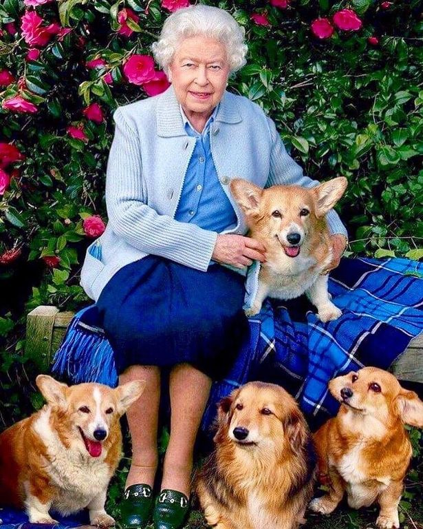 The Queen, pictured in 2016, with her dogs - only Candy at the bottom right, is still alive