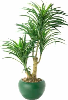 Plastic plant in pot