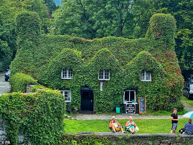 Researchers from the Royal Horticultural Society (RHS) have revealed that ivy can act as free air conditioning for your home, cooling the building by up to 12.9°F (7.2°C) in summer