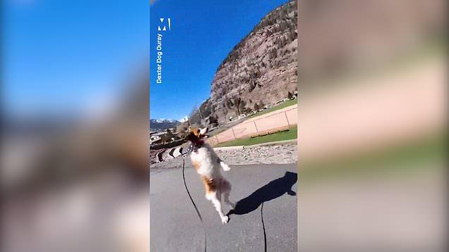 Meet Dexter, the dog that walks like a human