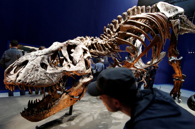The 67 million year-old skeleton of a Tyrannosaurus Rex dinosaur at the National Museum of Natural History in Paris, France (Reuters)
