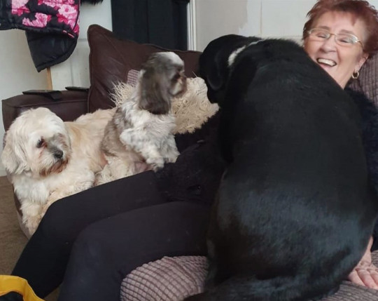 Pauline O'Connor with her dog and her daughter's dogs. PA Real Life/Collect